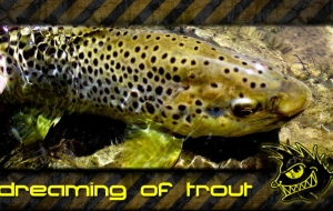 dreaming of trout